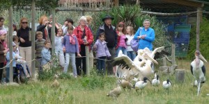groupe pelican 72dpi