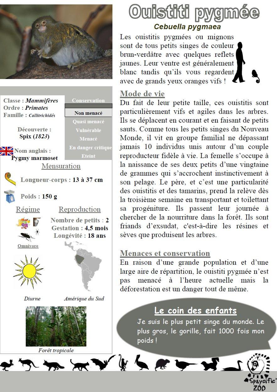 ouistiti-pygméee-panneau