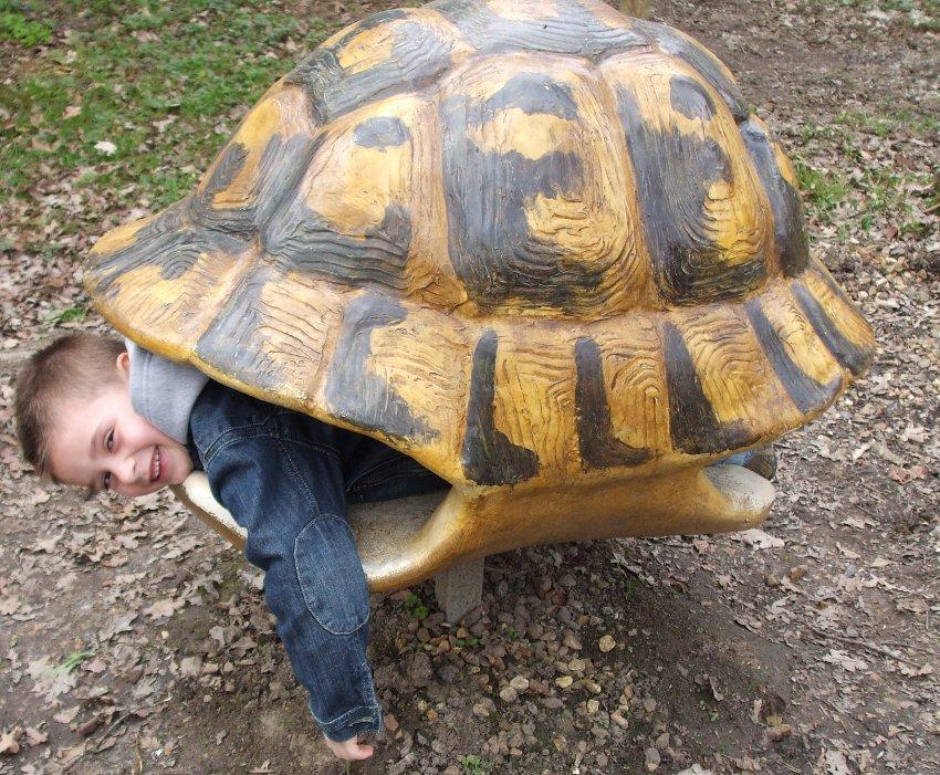 carapace de tortue dans laquelle les enfants entrent