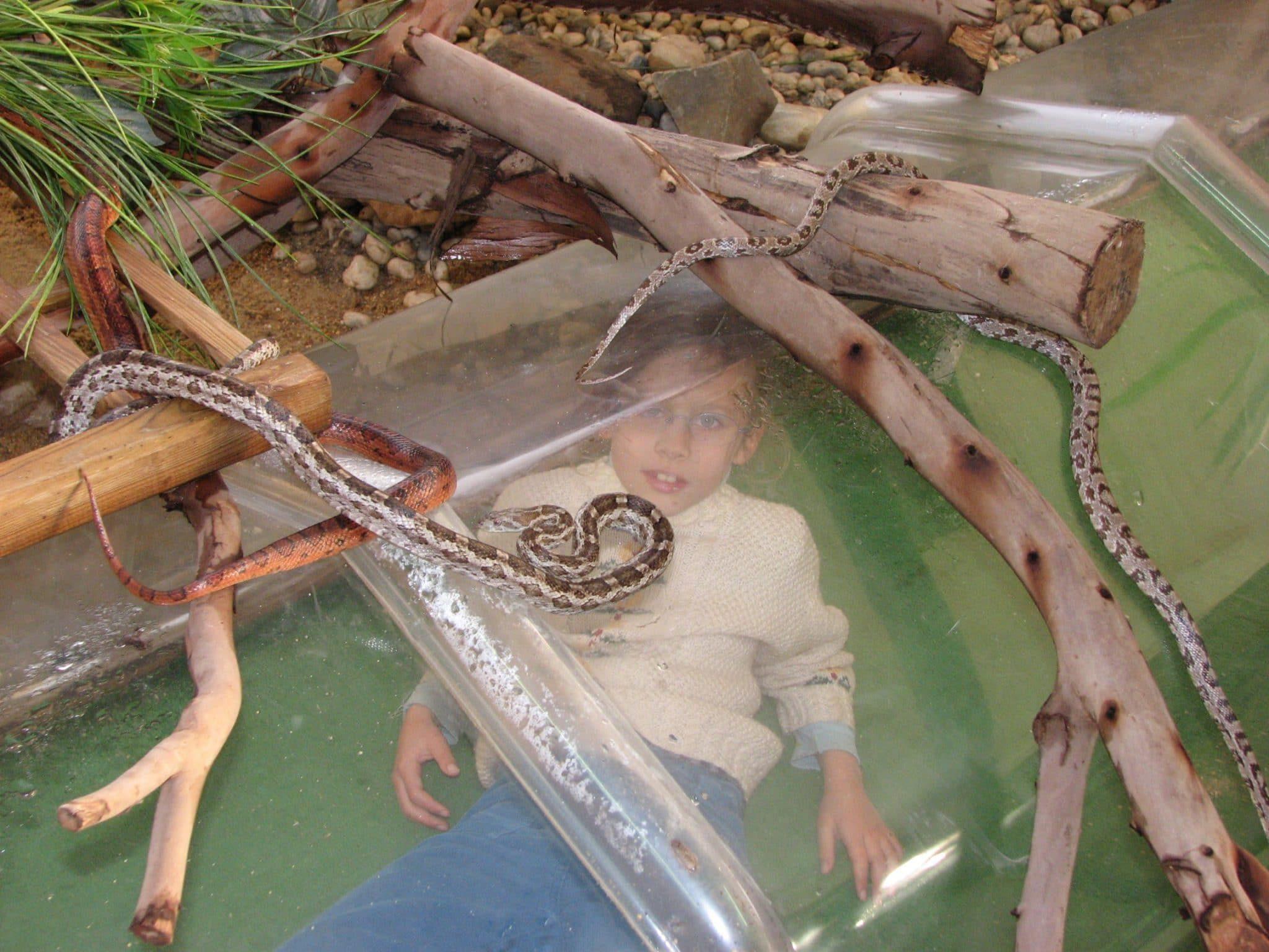 tunnel des serpents pour ramper au plus près des couleuvres des blés !