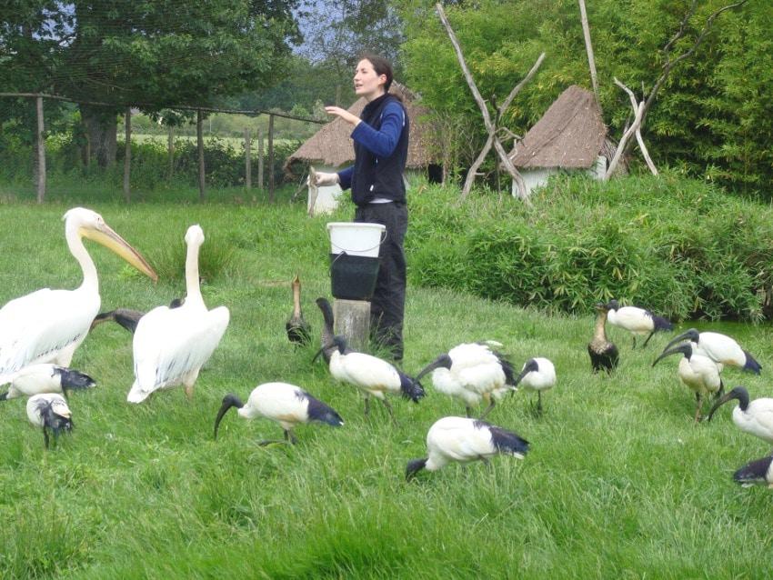 sara-pelicans-100dpi
