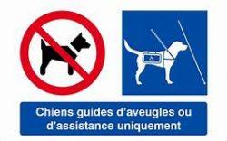 chien guide handicap